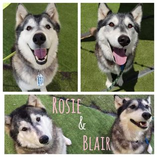Dogs For Adoption South Australian Humane Animal Rescue Association Before acquiring any dog, you must be prepared to make a commitment to providing that pet with a stable home for its whole life. dogs for adoption south australian